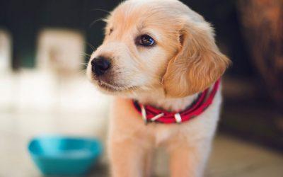 """""""Io posso entrare"""": l'Hostaria Dante è Dog Friendly"""
