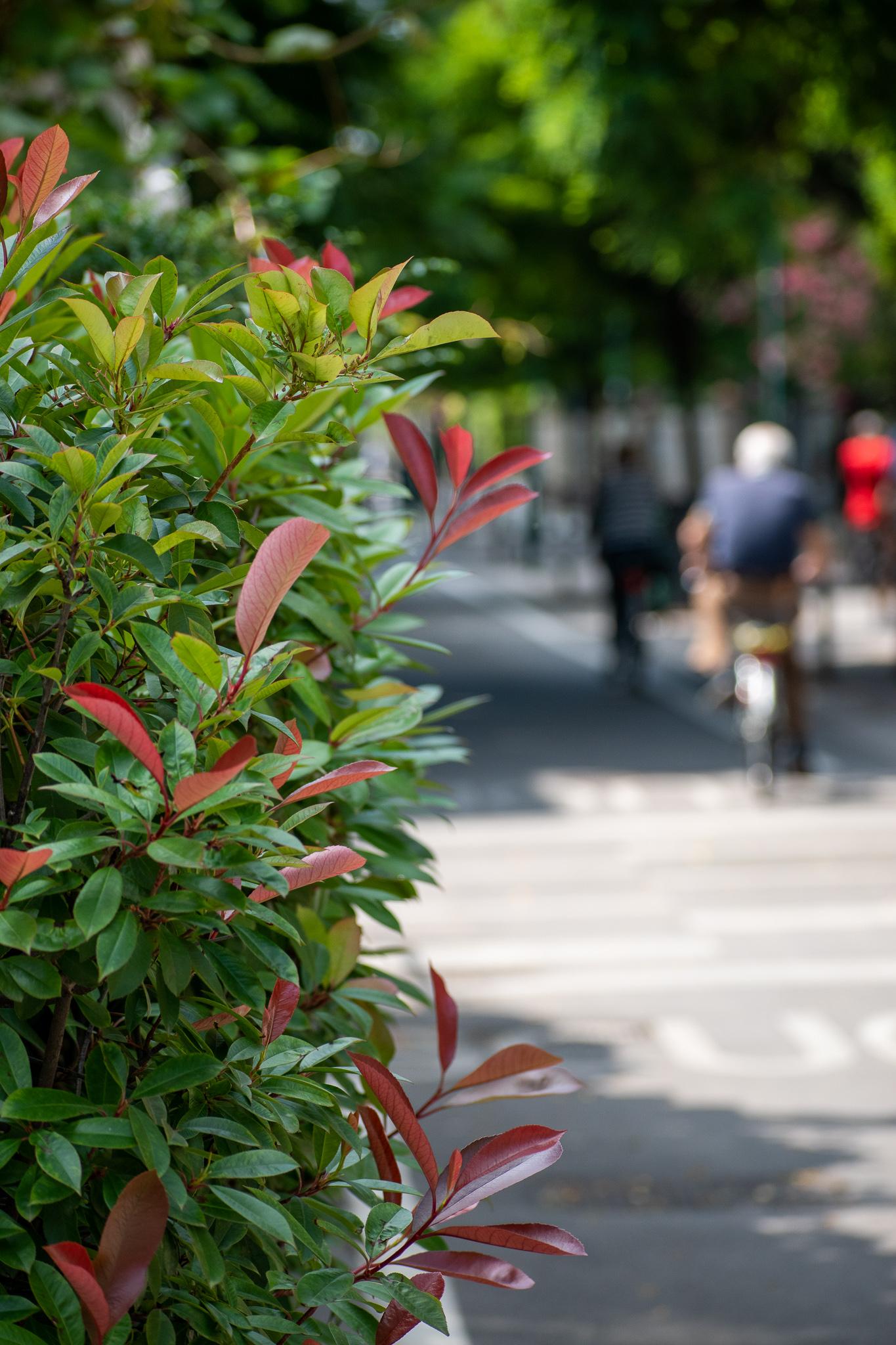 Anche se non sei un ciclista professionista, è importante ricordarsi che il corpo, durante una biciclettata, si ritrova a consumare energie e calorie che normalmente si bruciano in diversi giorni. Chi vuole la bicicletta deve saper pedalare ma anche saper mangiare nel modo migliore, per evitare sforzi eccessivi al proprio organismo.  Per non avere brutte sorprese durante la tua giornata in bicicletta lungo le piste ciclabili di Mestre,  a colazione è consigliabile fare scorta di carboidrati: pane e marmellata o bacon con uova strapazzate. Ovviamente almeno tre ore prima di iniziare a pedalare!